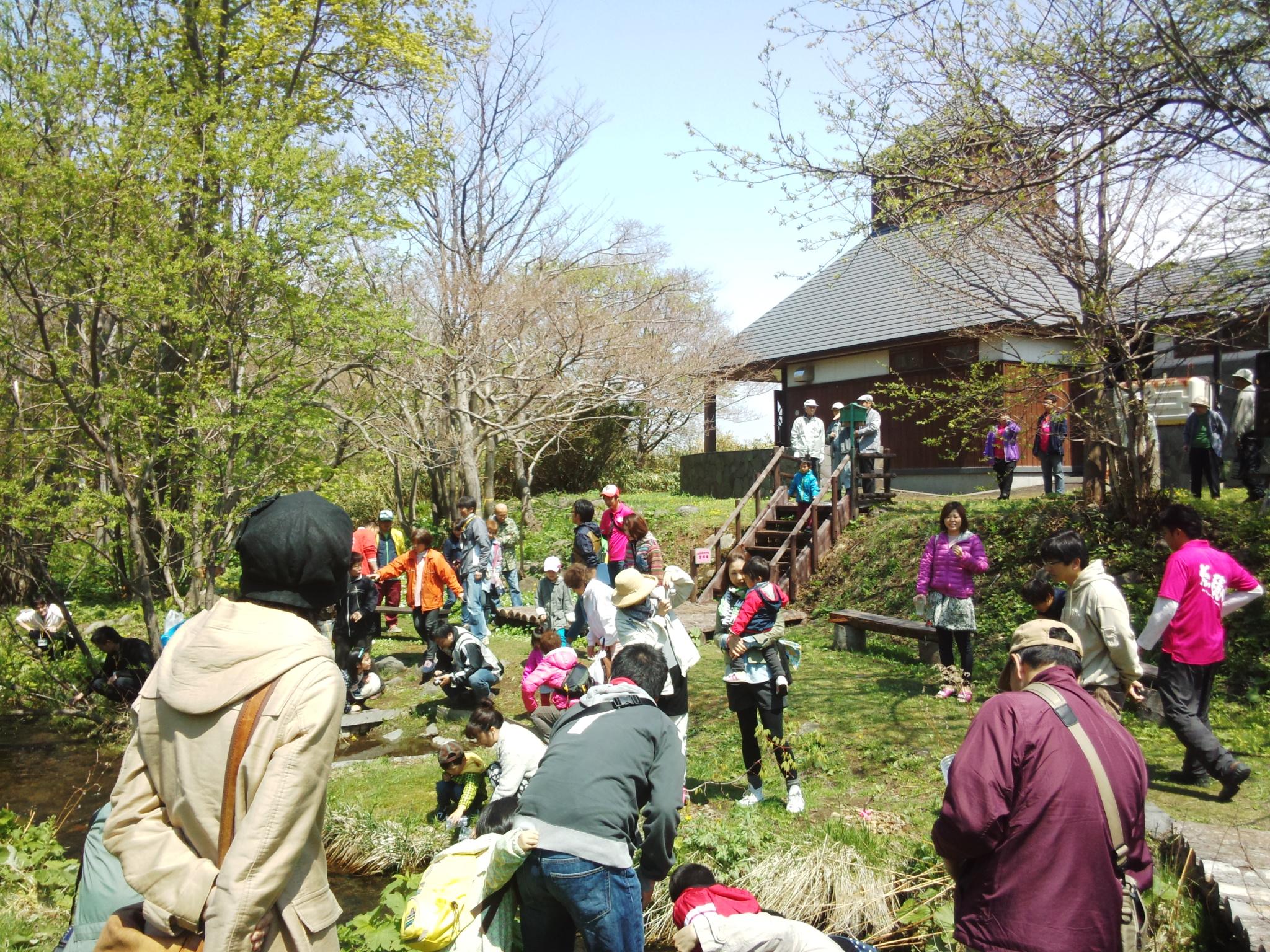 稚魚の放流体験など どっこい積丹さくらます祭り 札幌発着 (5/21) 札幌