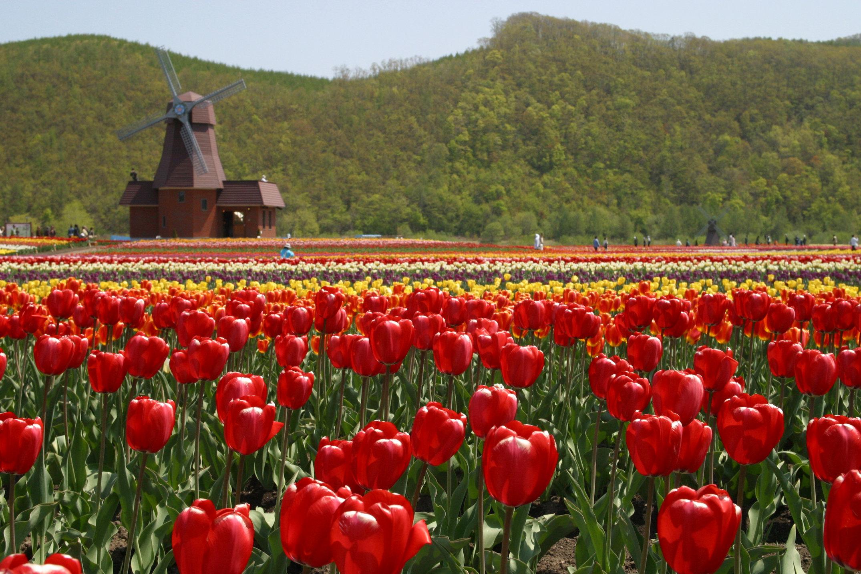道東3つの花めぐりと国内唯一の監獄博物館を観る 札幌発着 (5/19) 札幌