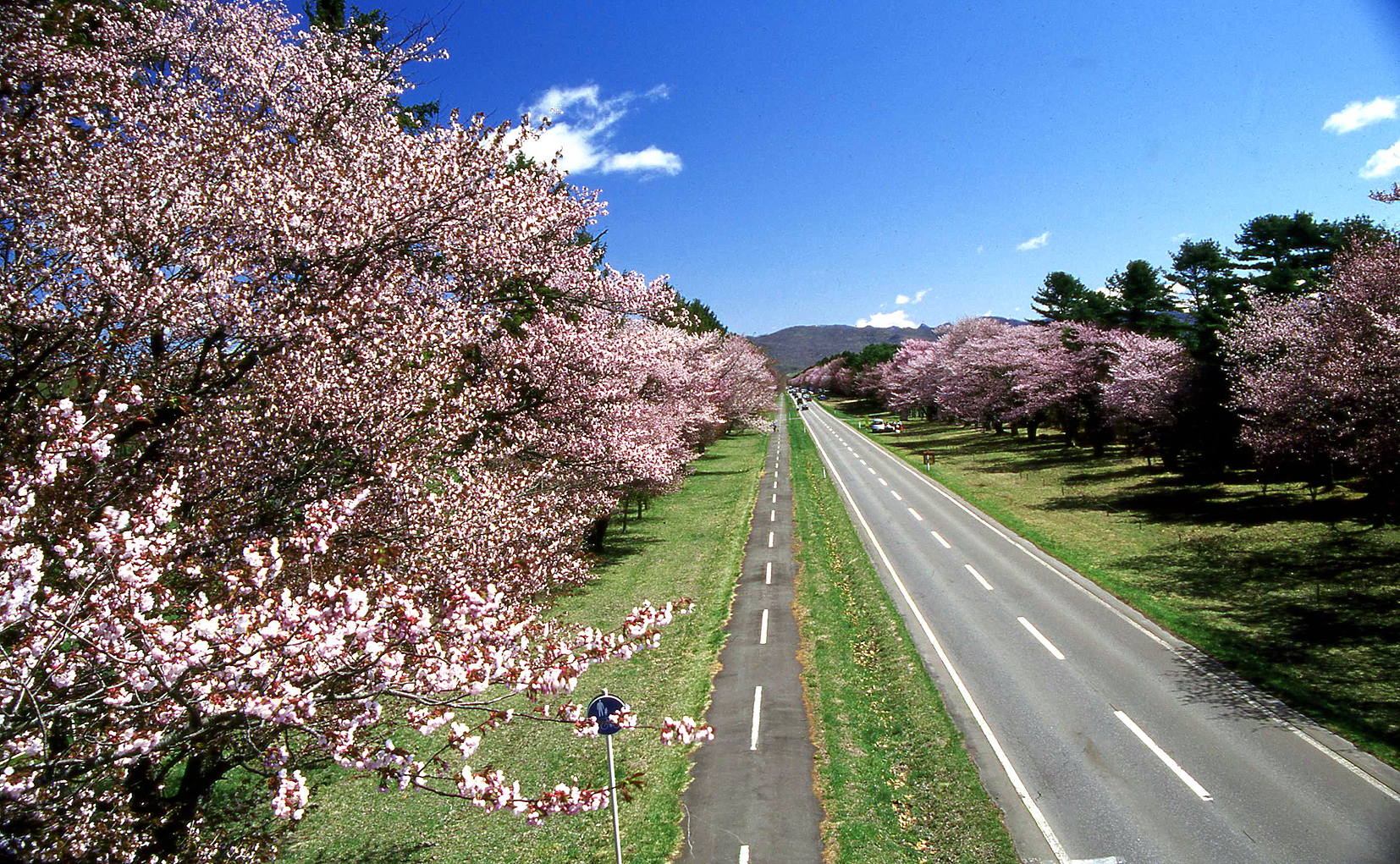 静内二十間道路桜並木と太陽の森ディマシオ美術館 札幌発着 (5/14) 札幌
