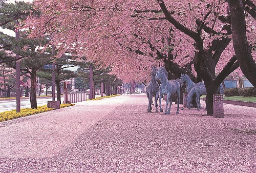 フェリーでいく 弘前公園夜桜観桜と青森の桜の名所めぐり 札幌発着 (4/29) 札幌