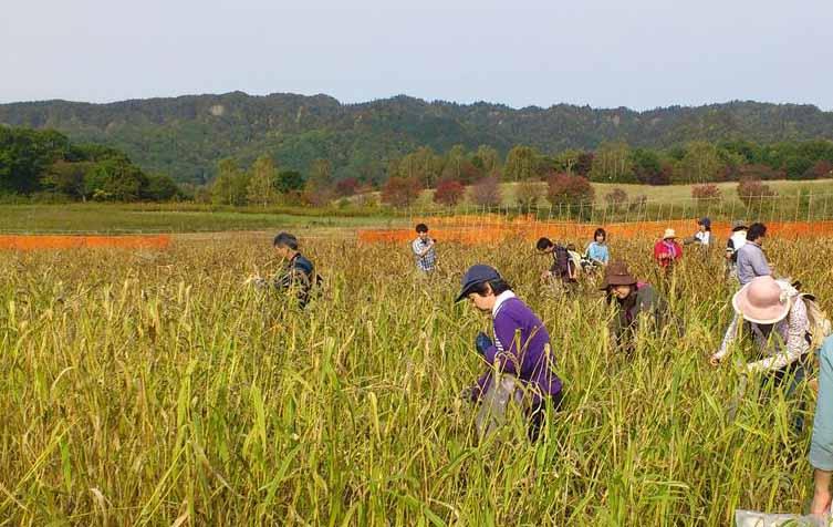 国有林の森林散策と平取地域再生事業 穀物収穫体験 札幌発着 (9/24) 札幌