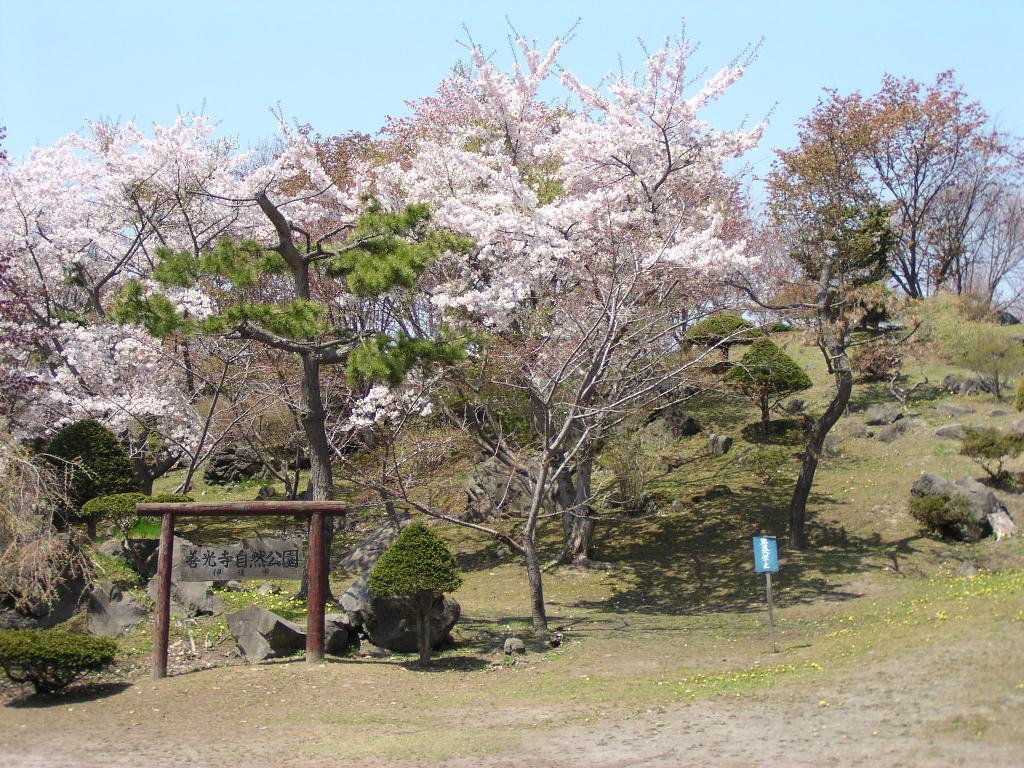 有珠善光寺の1000本桜と伊達特産の藍染体験 札幌発着 (5/14) 札幌