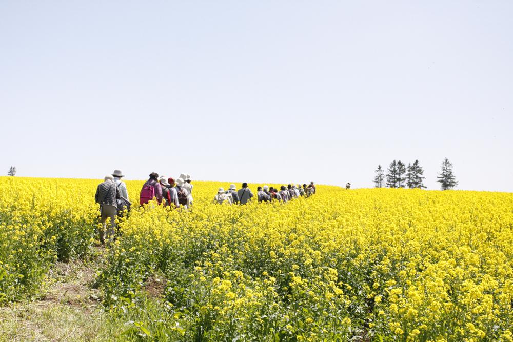 たきかわ菜の花が咲く丸加高原を専門ガイドとフットパス 札幌発着 (5/21) 札幌