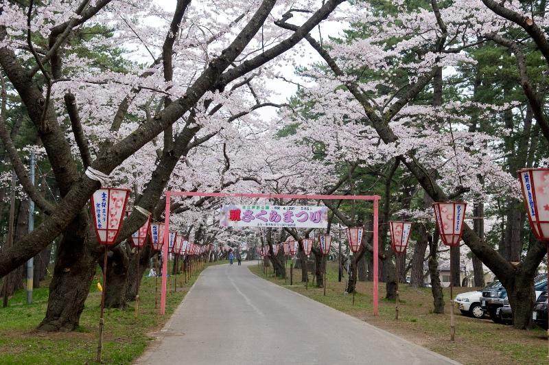 フェリーでいく 弘前公園夜桜観桜と青森の桜の名所めぐり 札幌発着 (4/25) 札幌